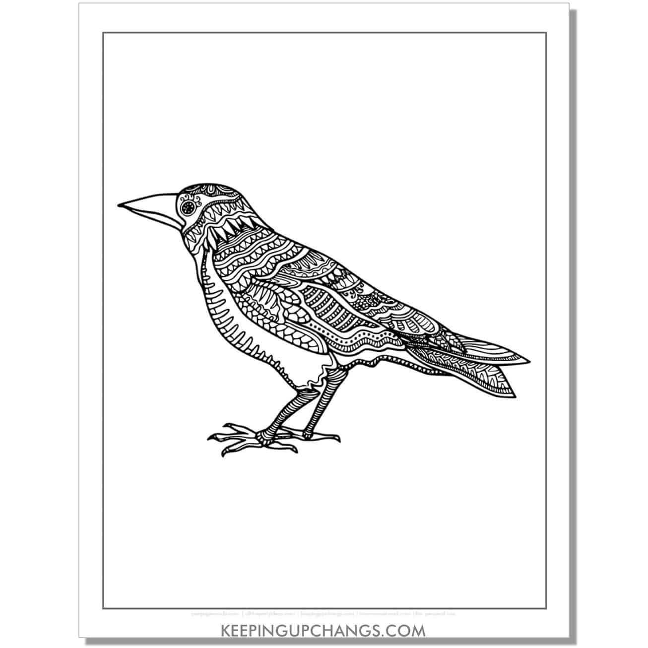 raven crow mandala adult halloween coloring page.