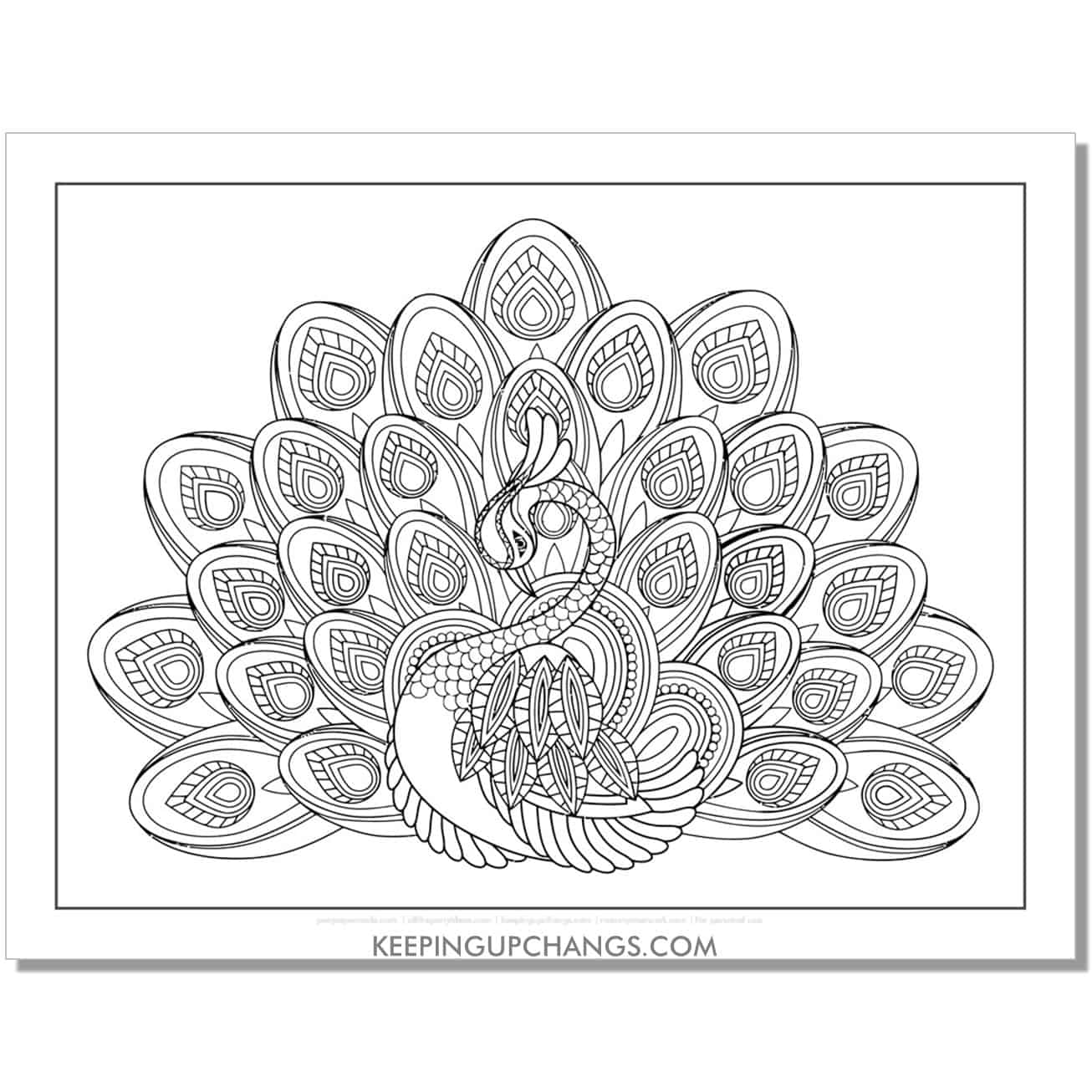 female peahen peacock coloring page.