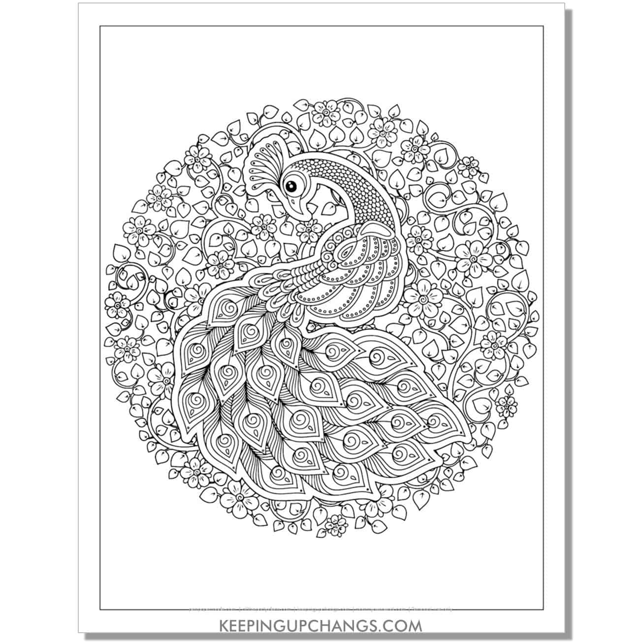 advanced peacock coloring page.