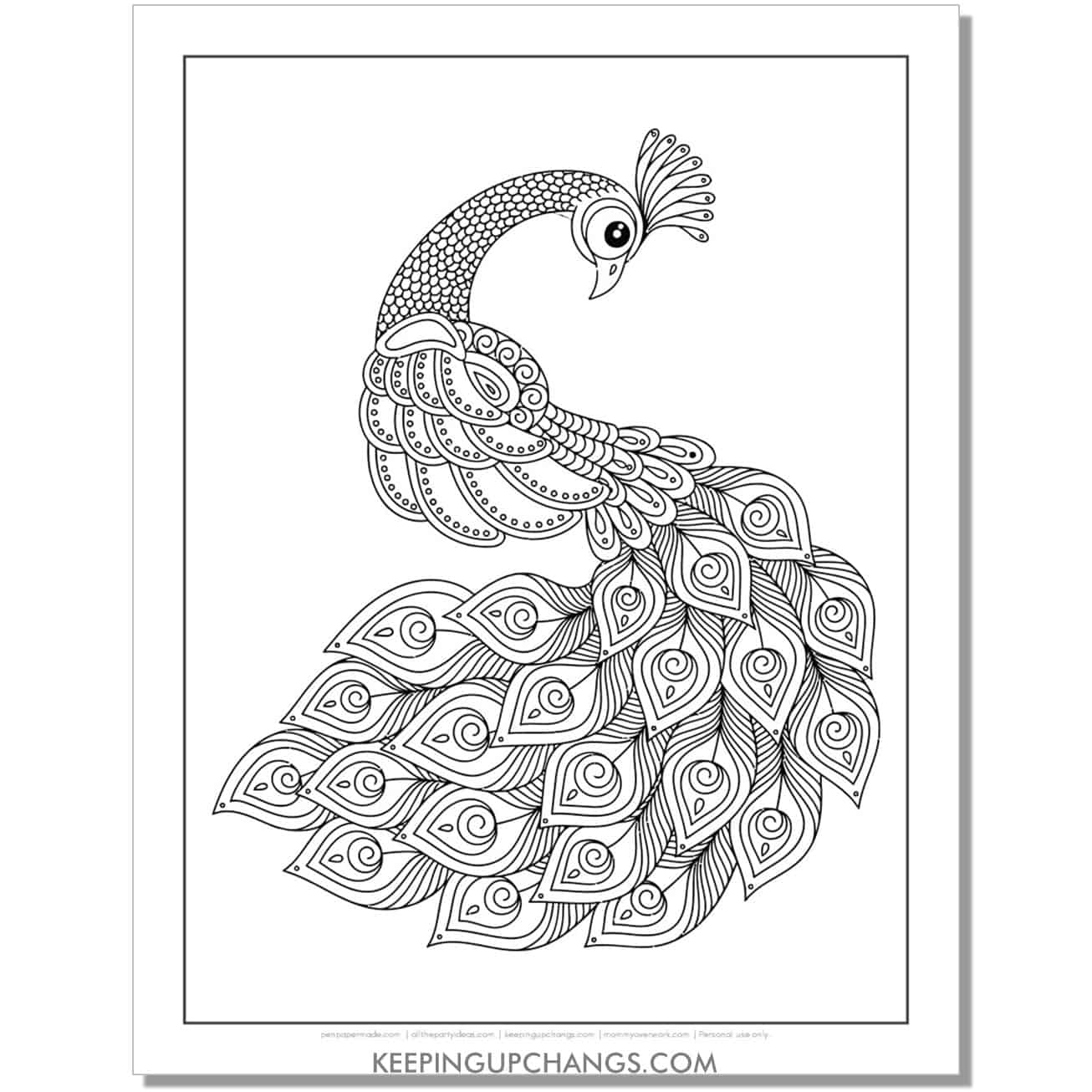 peacock coloring page with beautiful peacock feathers.