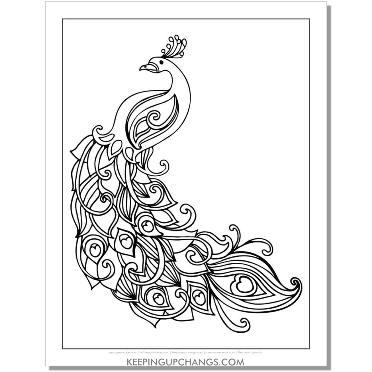 simple realistic peacock coloring page.